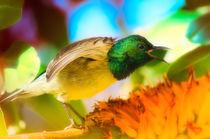 bunte Vogelwelt  by Barbelotta  1
