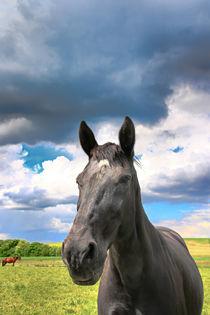 Pferd unter Wolken 2 by Bernhard Kaiser