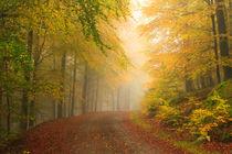 Herbstwald by Heidi Bücker