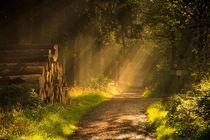 Sonnenstrahlen zeigen den Weg by Heidi Bücker