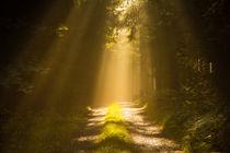 Am Ende des Lichts by Heidi Bücker