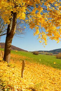 Leuchtender Herbst by Heidi Bücker
