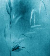 blue oat by Franziska Rullert