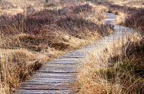 Der Weg by Jacqueline Kolesch
