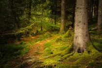 Waldweg by Heidi Bücker