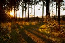 Sonnenstrahlen erhellen den Weg by Heidi Bücker