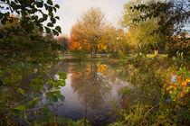 Herbstfarben am Teich by Heidi Bücker