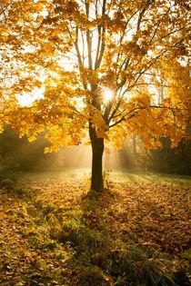 Herbstleuchten im Park von Heidi Bücker