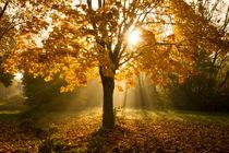 Herbstleuchten by Heidi Bücker