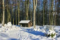 Futterstelle im Winterwald by Heidi Bücker