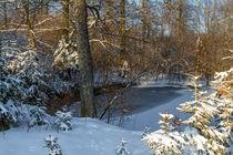 Teich im Winterwald von Heidi Bücker
