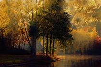 Golden morning von sylvia scotting