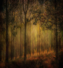 Golden rays of autumn  by sylvia scotting