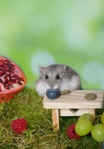 Hamster / 8 von Heidi Bollich