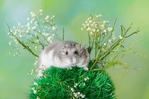 Hamster / 10 von Heidi Bollich