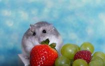 Hamster / 9 von Heidi Bollich