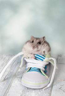 Hamster / 11 von Heidi Bollich