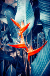 Tropical Parakeet Flower von cinema4design