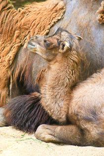 Nachwuchs im Zoo von Bernhard Kaiser