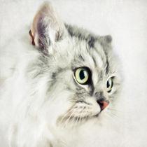 Katzenportrait von AD DESIGN Photo + PhotoArt