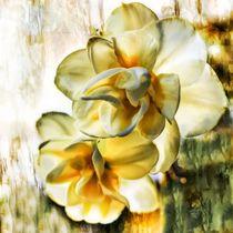 Orchidee by Sonja Teßen