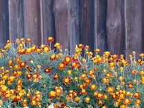 Herbstblumen von Alexandra  Amann