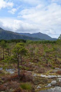 norwegian plains von hannes-bielefeldt