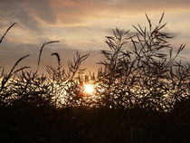 Sonnenuntergang durch Gras am Strand by Simone Marsig
