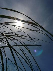 Sonnenblintzeln durch Strandgras von Simone Marsig