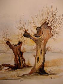 Kopfweiden by Dorothy Maurus