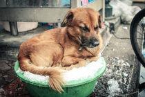 Hund sucht Abkühlung by Jochen Conrad