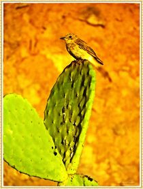 ~ Little Bird on Cactus ~ von Sandra  Vollmann