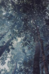 Amazonas III von Florian Jung