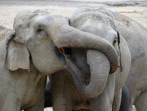 Elefantenkuss by Ulrico Czysch