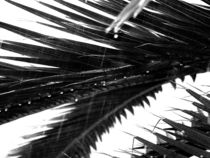 Palmen im Regen von Johanna Knaudt
