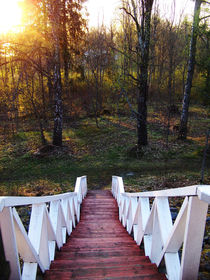 Treppe in den Wald von Johanna Knaudt