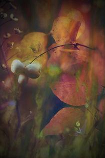 IM FARBENRAUSCH by © Ivonne Wentzler
