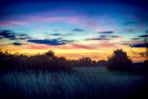 Under Secret Skies by Vicki Field