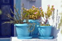 Kleiner Garten auf Santorin von Nicola Furkert