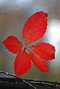 leaves... 4 von loewenherz-artwork