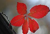 leaves... 3 by loewenherz-artwork