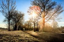 Wege in Oberschleißheim von Andreas Brauner