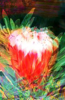 A-p1090733-collage-a-flowers-wild-phantasy