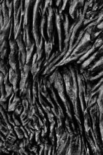 Bark by Minhajul Haque
