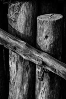 Wood by Minhajul Haque