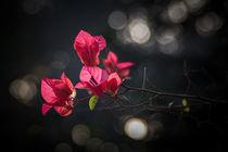 Sunlit Flowers von Minhajul Haque