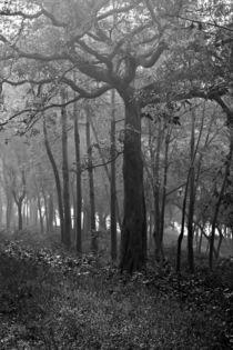 A Lone Tree by Minhajul Haque