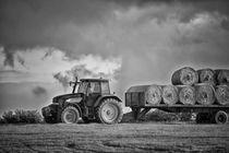 Harvest Time by Vicki Field