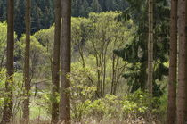 Spring Forest by dag