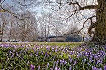 Frühling in Freimann von Andreas Brauner